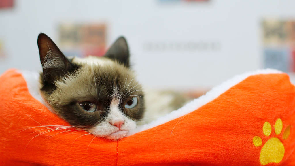 Grumpy Cat awarded $710K in lawsuit