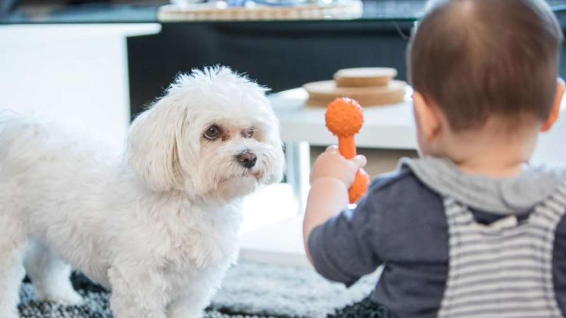 Auch für Kleinkinder gelten Hunderegeln» vom 5. April 2018: Kleinkinder sollten von Anfang an Signale des Hundes verstehen. Knurrt er, will er etwa gerade Ruhe haben. Foto: Christin Klose/dpa-tmn