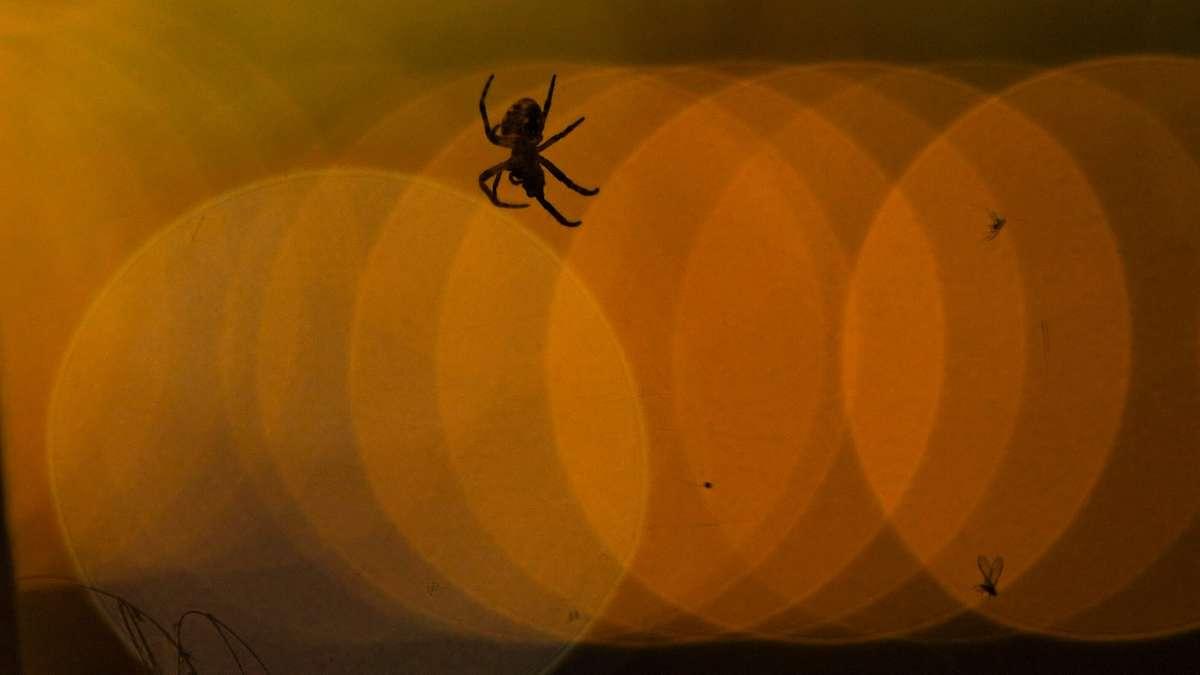 Spinnen Essen Im Schlaf