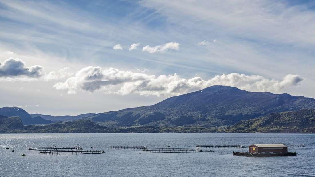Die norwegische Aquakultur basiert oft auf Netzgehegen im freien Meer oder in Buchten und dient vor allem der Zächtung von Lachsen